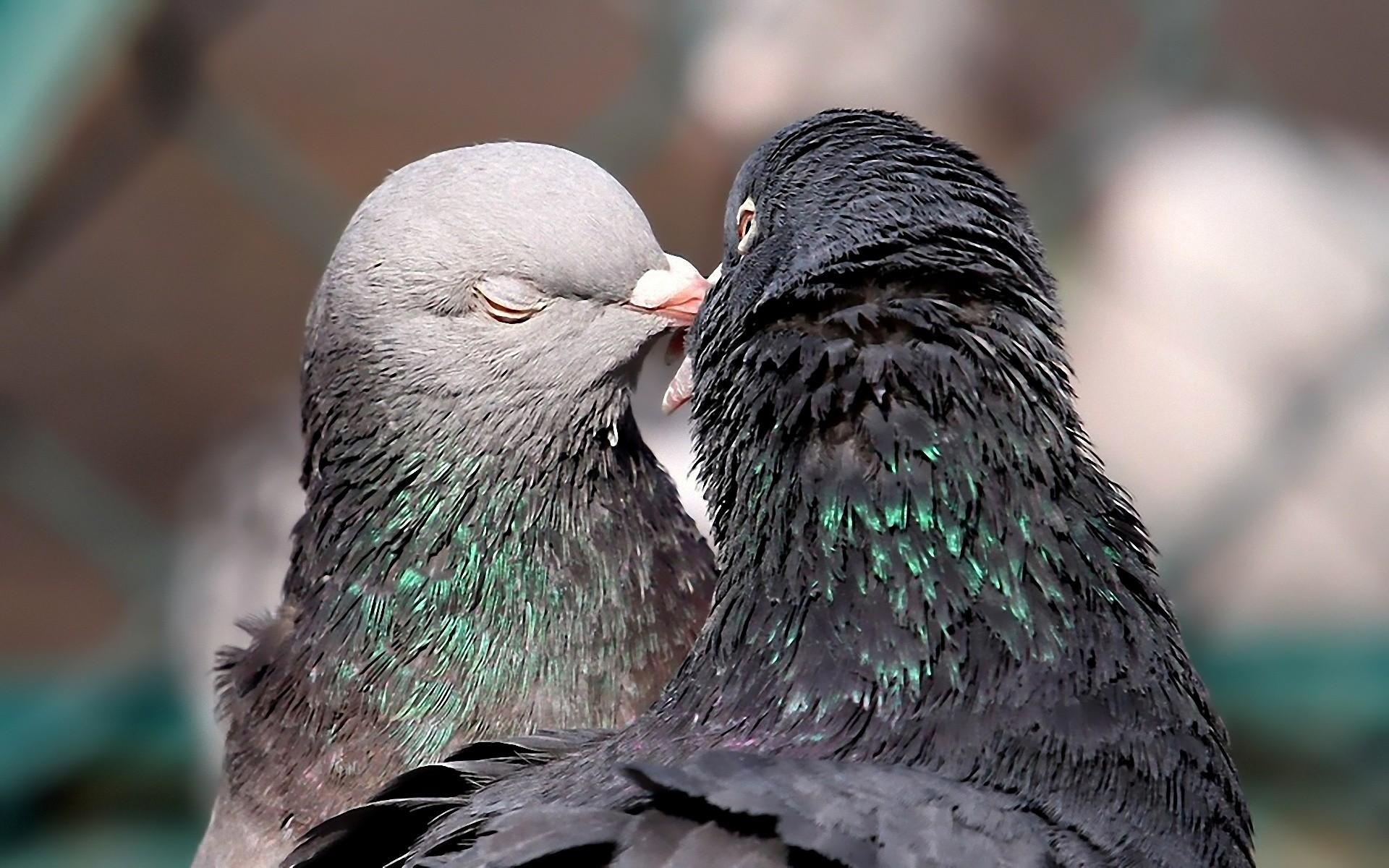 鳥害対策のアイデア
